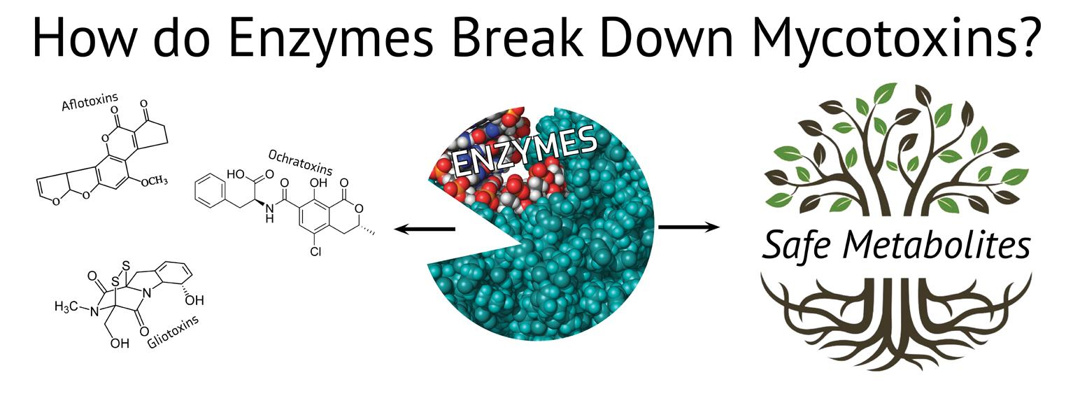 Page 13 of Surface Guard Study - Why Enzymes?