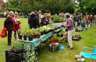 Page 26 of HPS Bookham Plant Sale