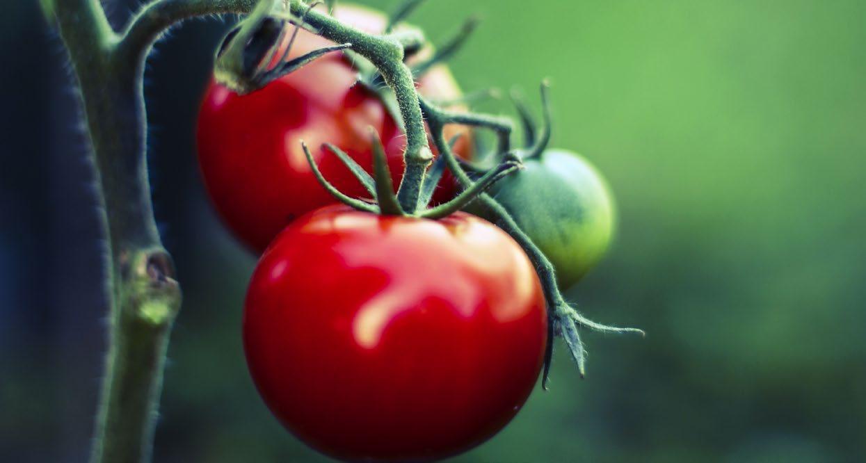 Page 57 of Tomater, soja, mandlar och hela linfrön sänker kolesterolet