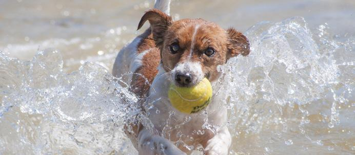 Page 48 of Dog Park Etiquette &Beach Rules