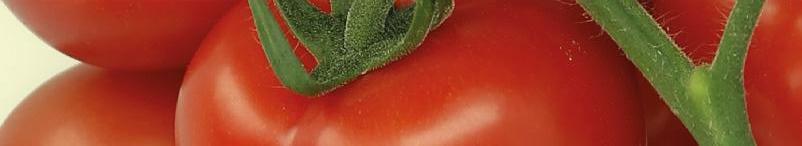 Page 68 of Intensive Rotfärbung fördert das Geschmackserleben und die Qualität bei Tomaten
