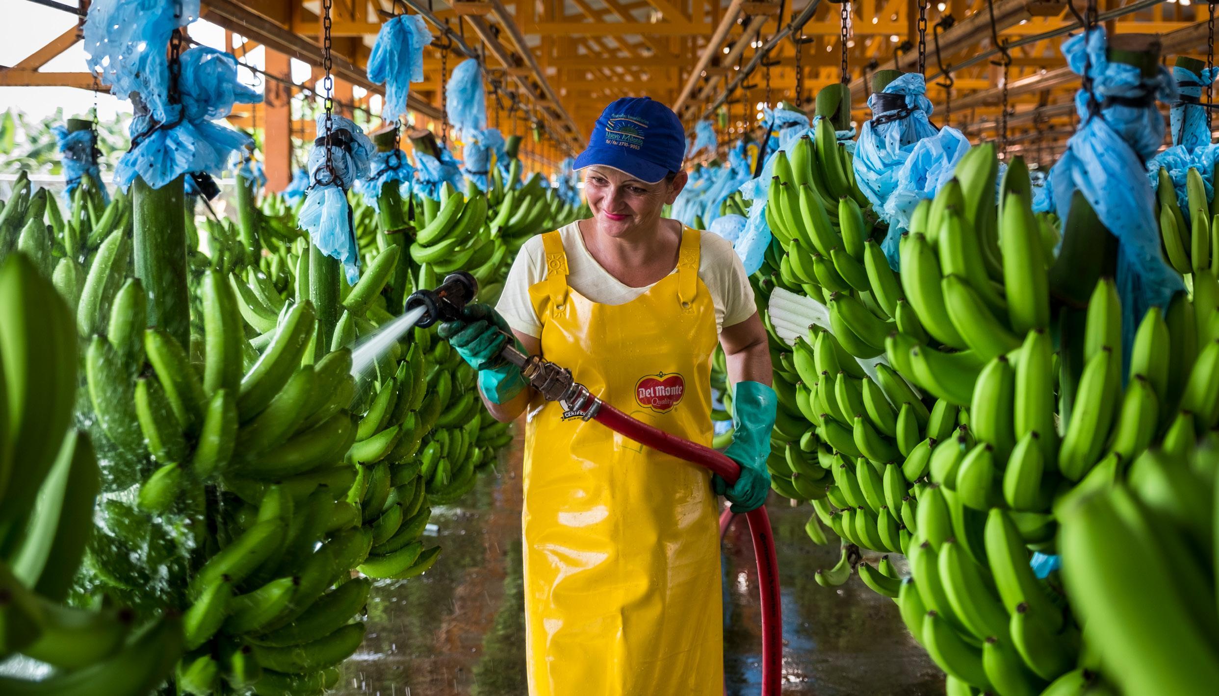 Page 28 of Bananen sind zu einem 'Must have' geworden