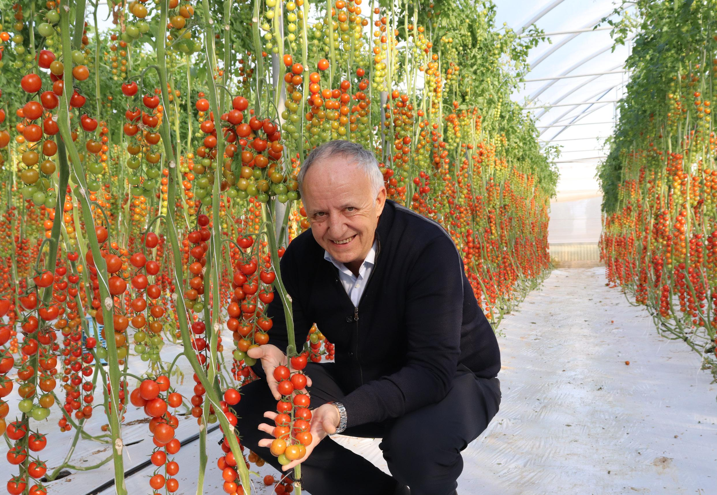 Page 76 of Is Munich still the main destination for the export of Italian greenhouse-grown vegetables to Germany?