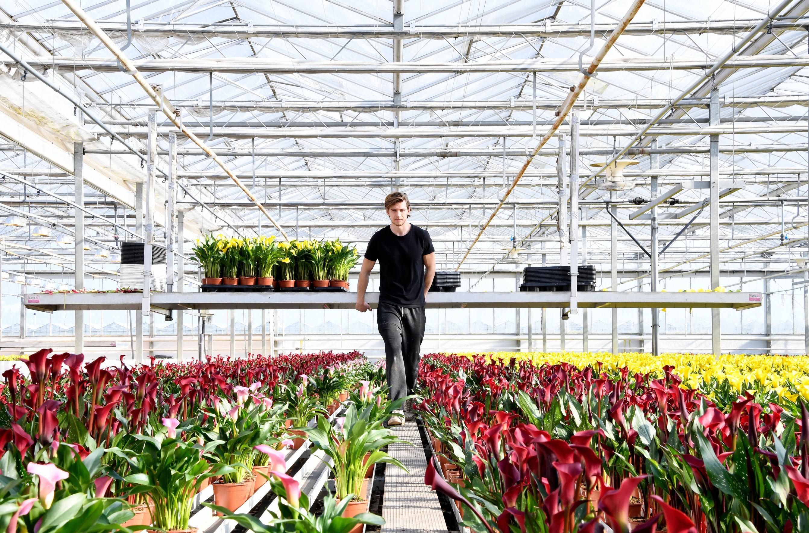 Page 52 of Bram Breugem over BB Plant