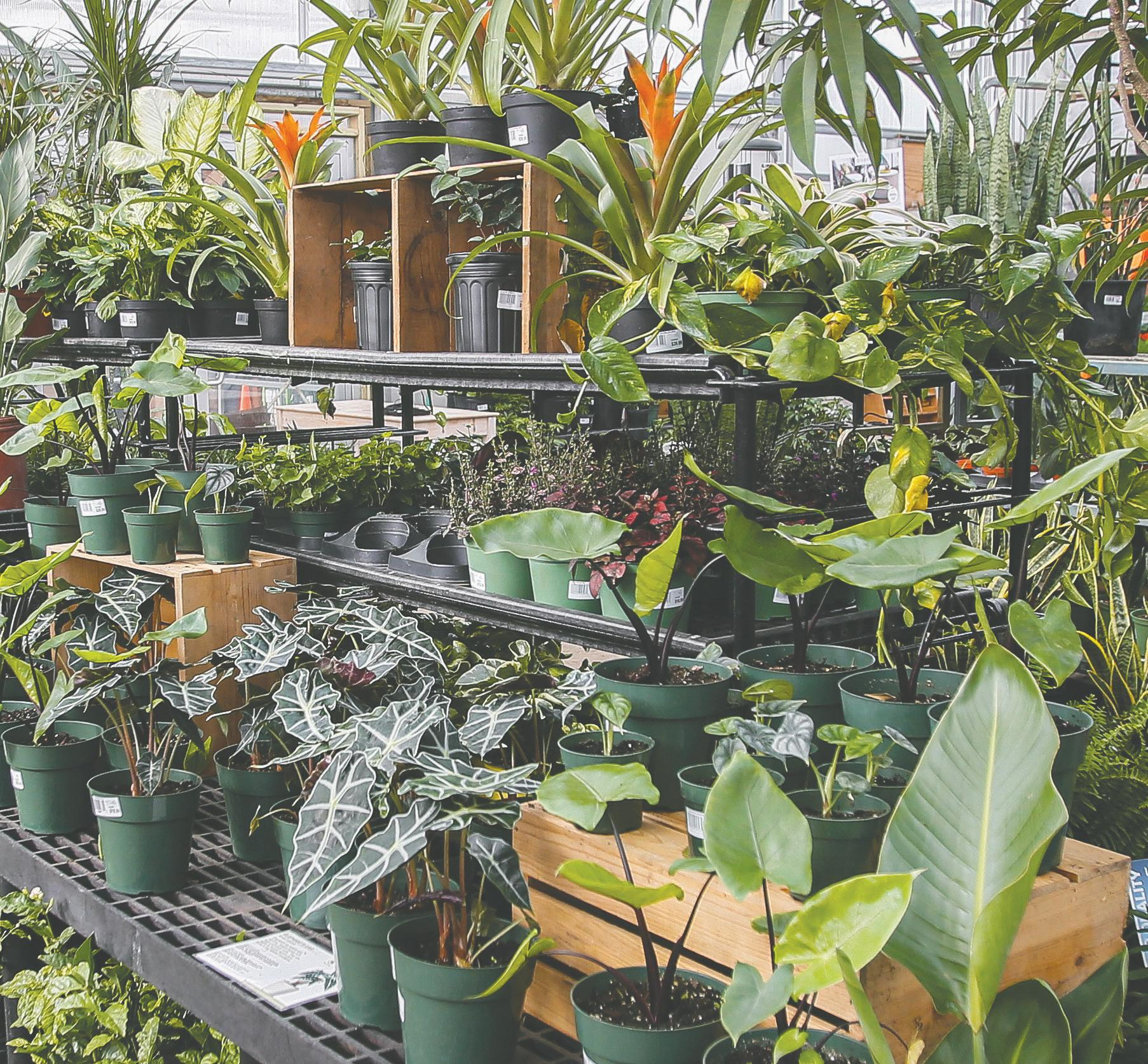 Page 9 of Long-lived houseplants become heirlooms