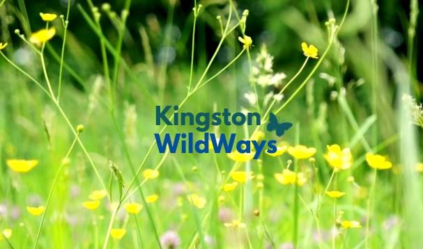 Page 10 of Kingston Wildways