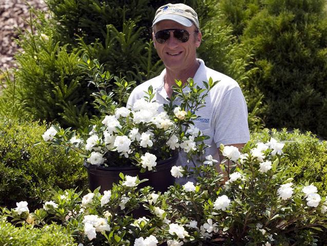 Page 14 of Philip Dark's Passion for Gardenias