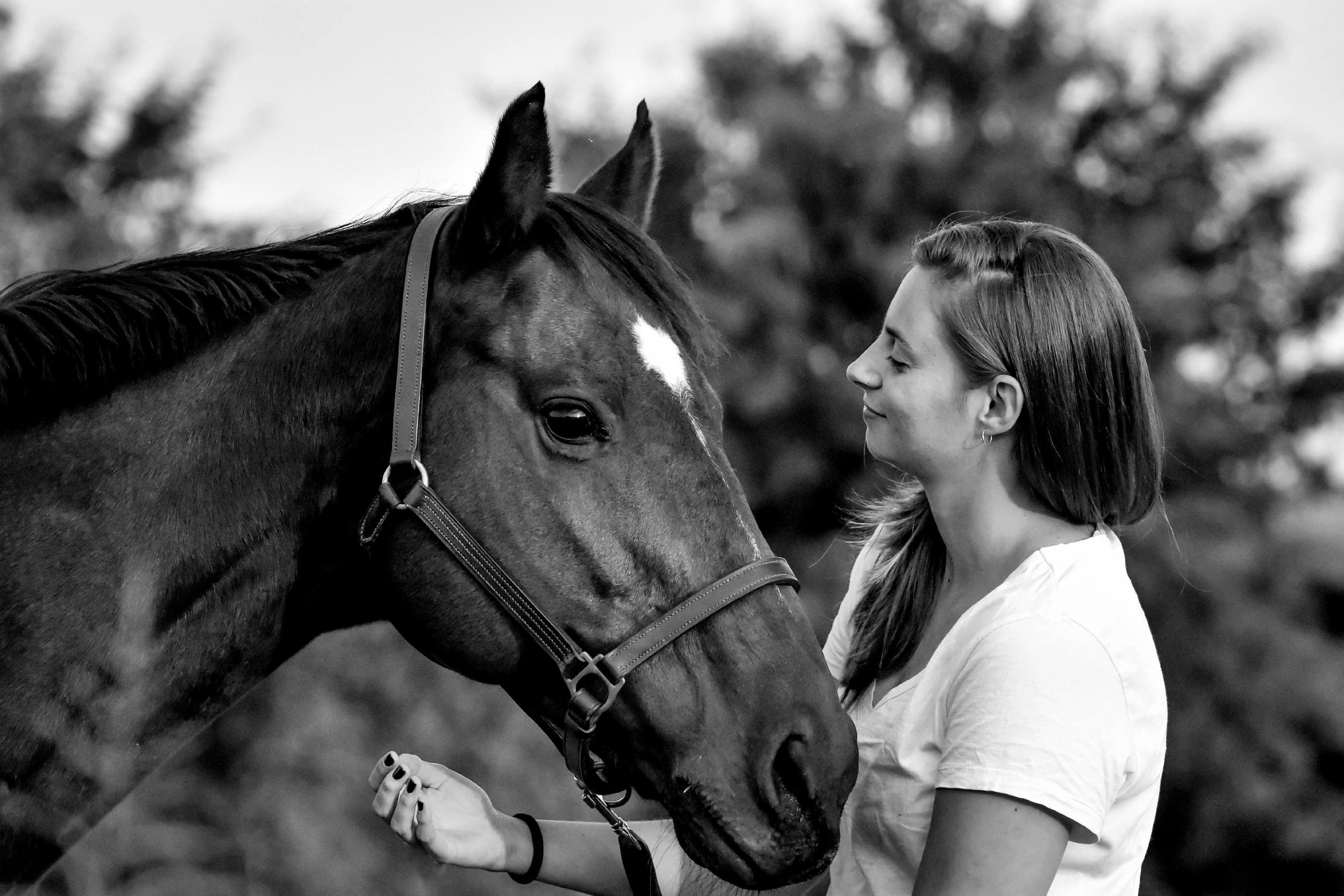Page 36 of Why horses are so in tune with human emotion