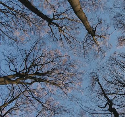 Page 16 of The Hidden Life of Trees Sabaya