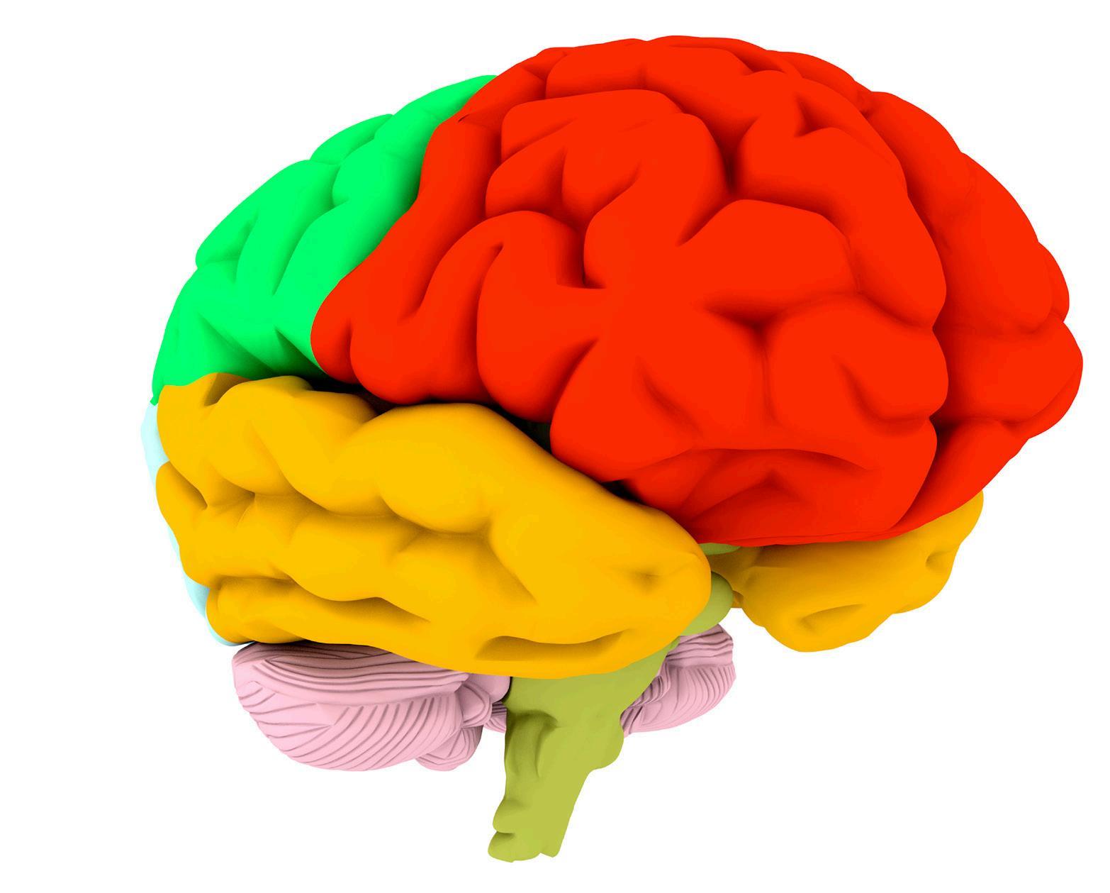 Page 24 of La importancia de la corteza prefrontal para tu salud emocional