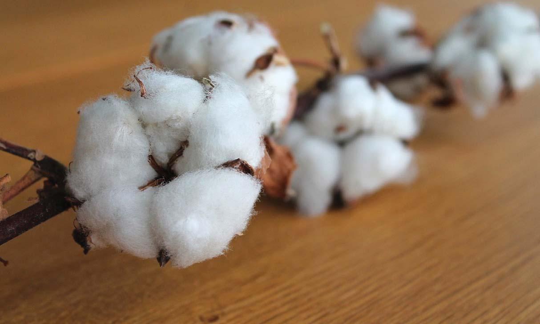 Page 29 of Cotton Trust Protocol adopts TextileGenesis blockchain for sustainable cotton farming