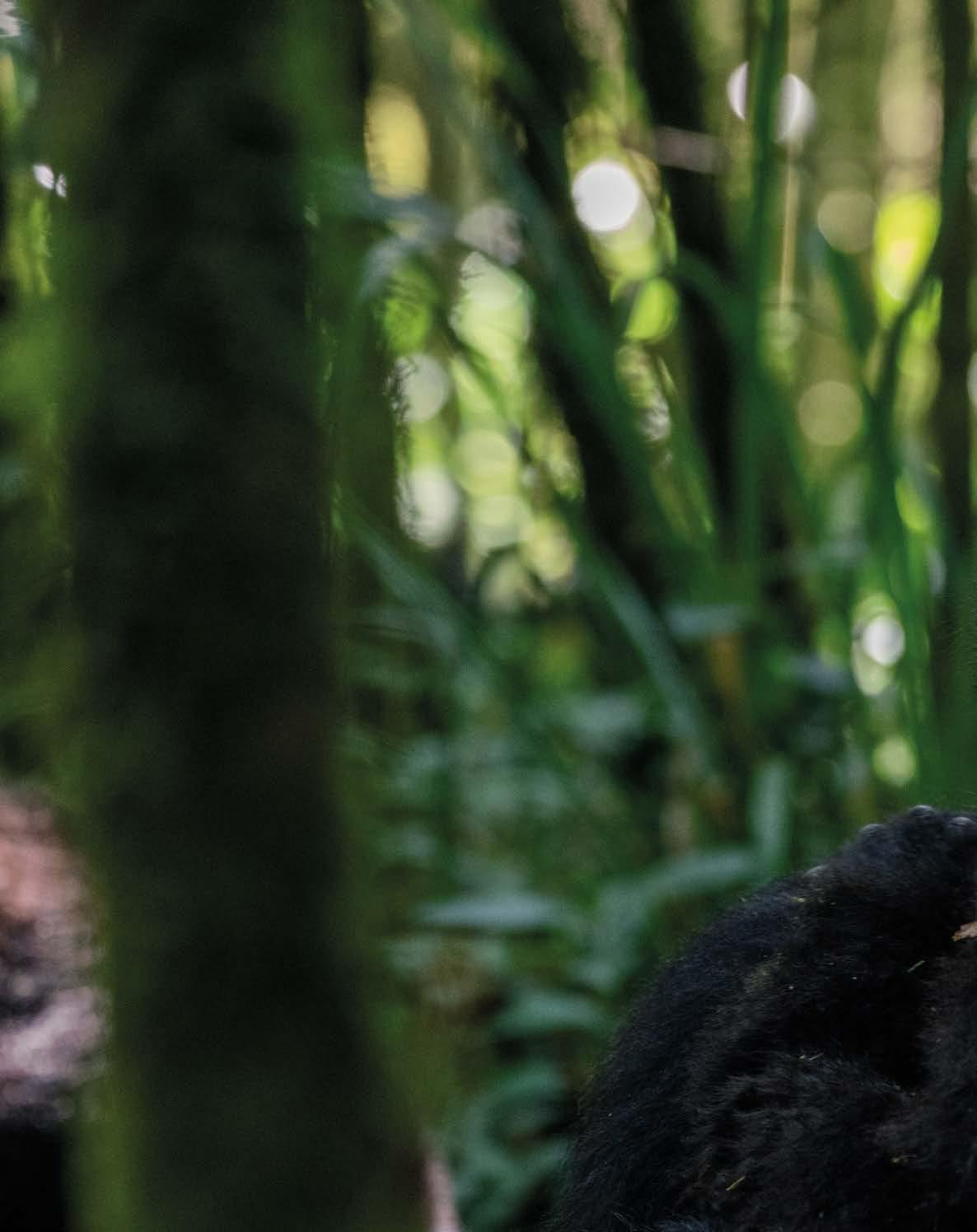 story from: Rwanda Travel