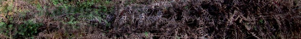 Page 48 of x La restauración de la laurisilva en ambientes degradados de Gran Canaria [pág