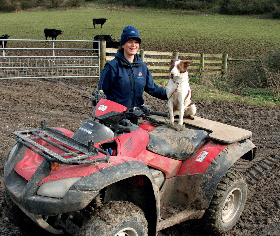 Page 5 of New legislation on dog attacks welcomed by sheep farmers