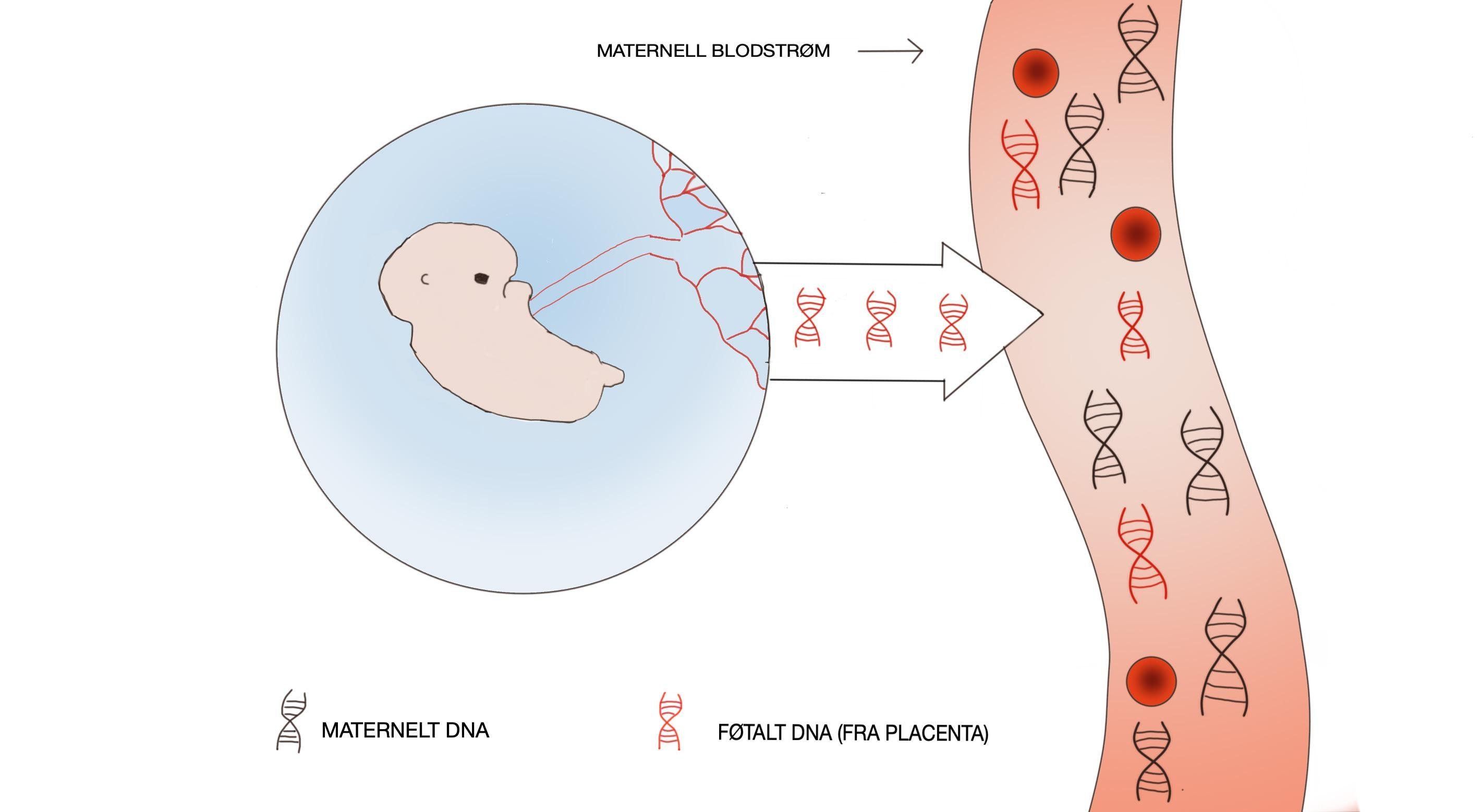 Page 16 of Analyse av cellefritt DNA i svangerskap Ragnhild Glad og Mona Nystad