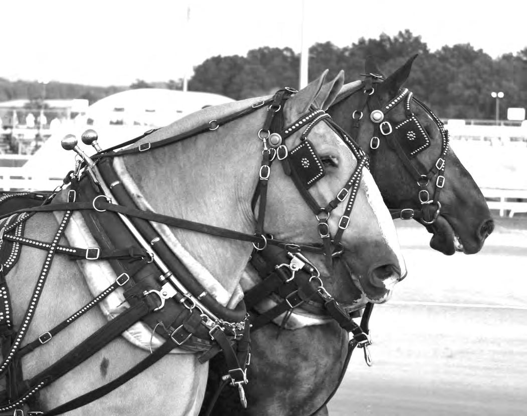 Page 44 of Draft Horse Pull