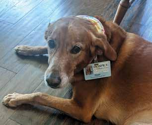 Page 14 of A retired nurse partners with a therapy dog