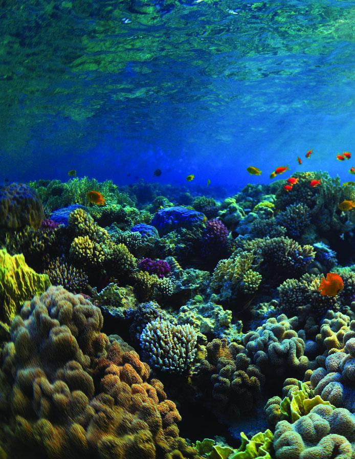 Page 22 of Studying Coral Reefs