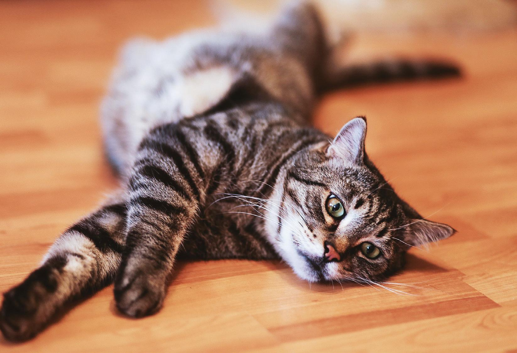 Page 35 of BEST FLOORING FOR PETS
