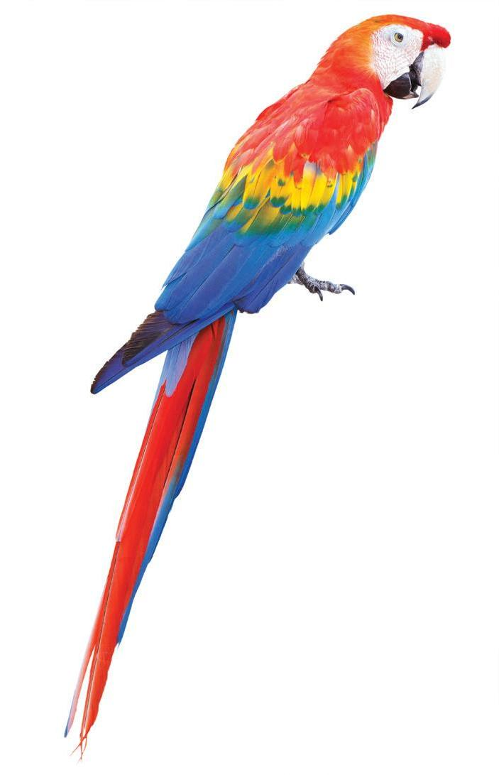 Page 36 of POPULAR PARROTS