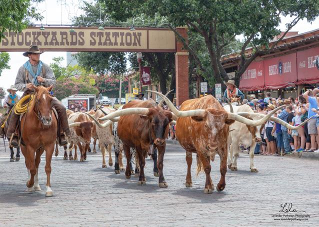 Page 4 of National Day of the American Cowboy in the Fort Worth Stockyards National Historic District