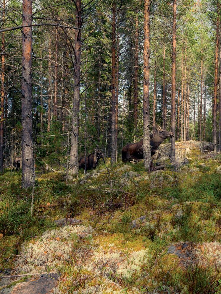 Page 24 of Jyväskylän ammattikorkeakoulu