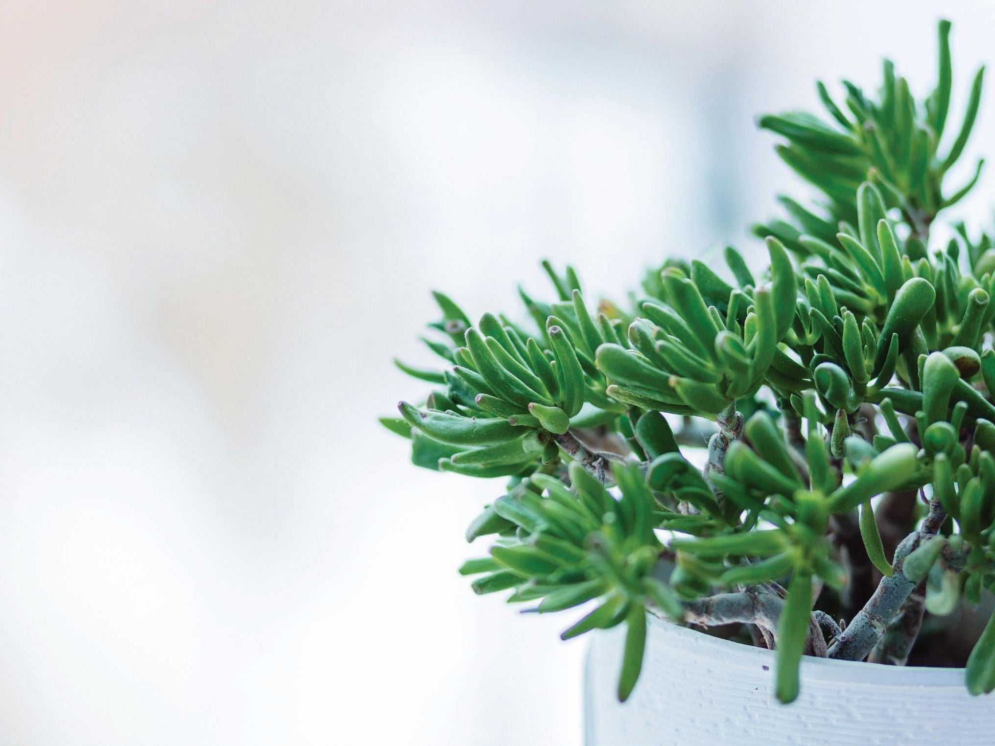 Page 18 of Low-maintenance garden ideas for your investment property