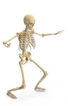 Page 24 of Forskning på skøre knogler