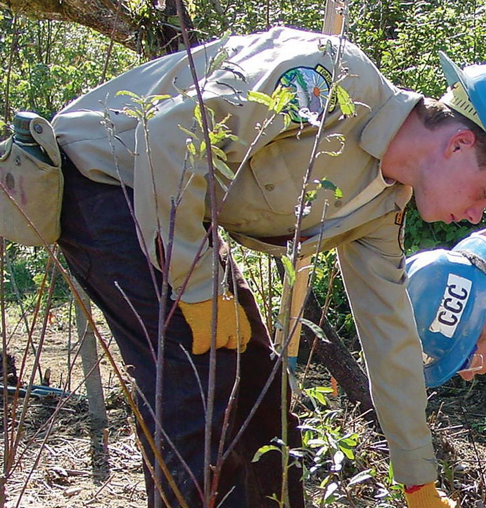 Page 6 of California Conservation Corps