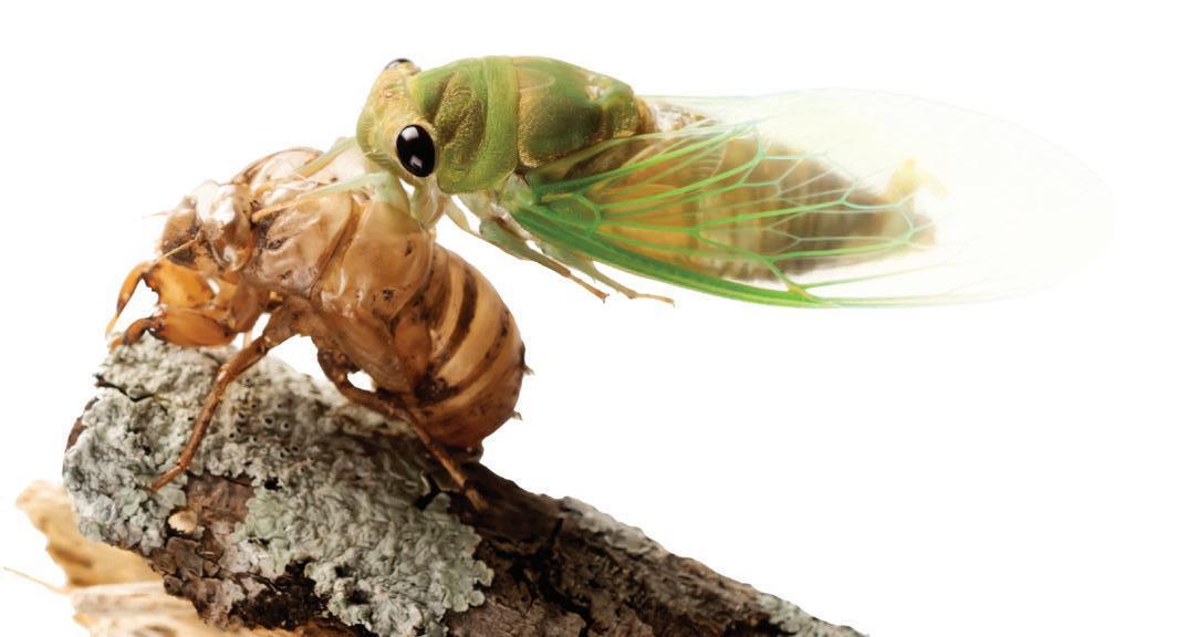 Page 30 of Cicadas