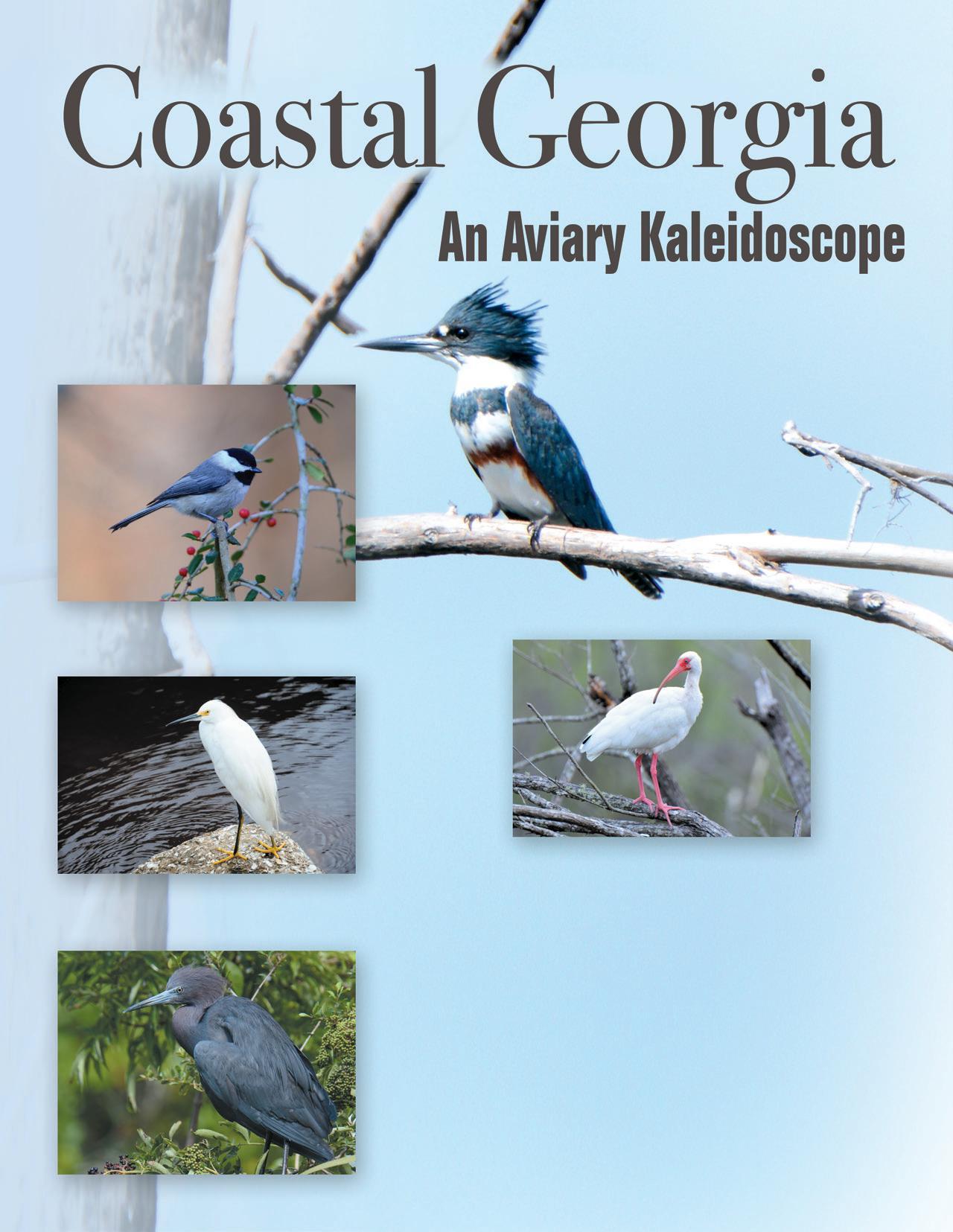 Page 46 of Coastal Georgia: An Aviary Kaleidoscope