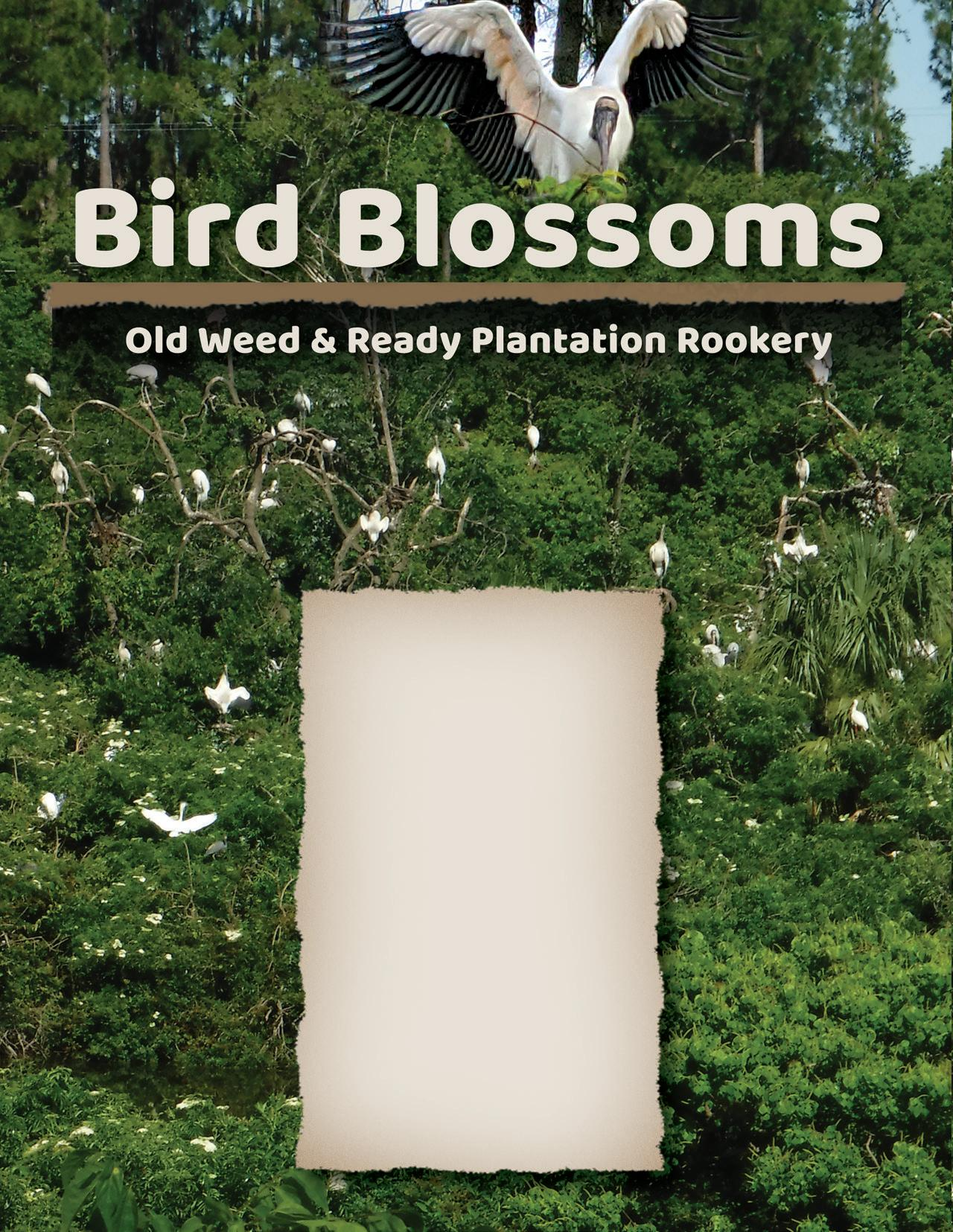 Page 66 of Bird Blossoms: Old Weed & Ready Plantation Rookery