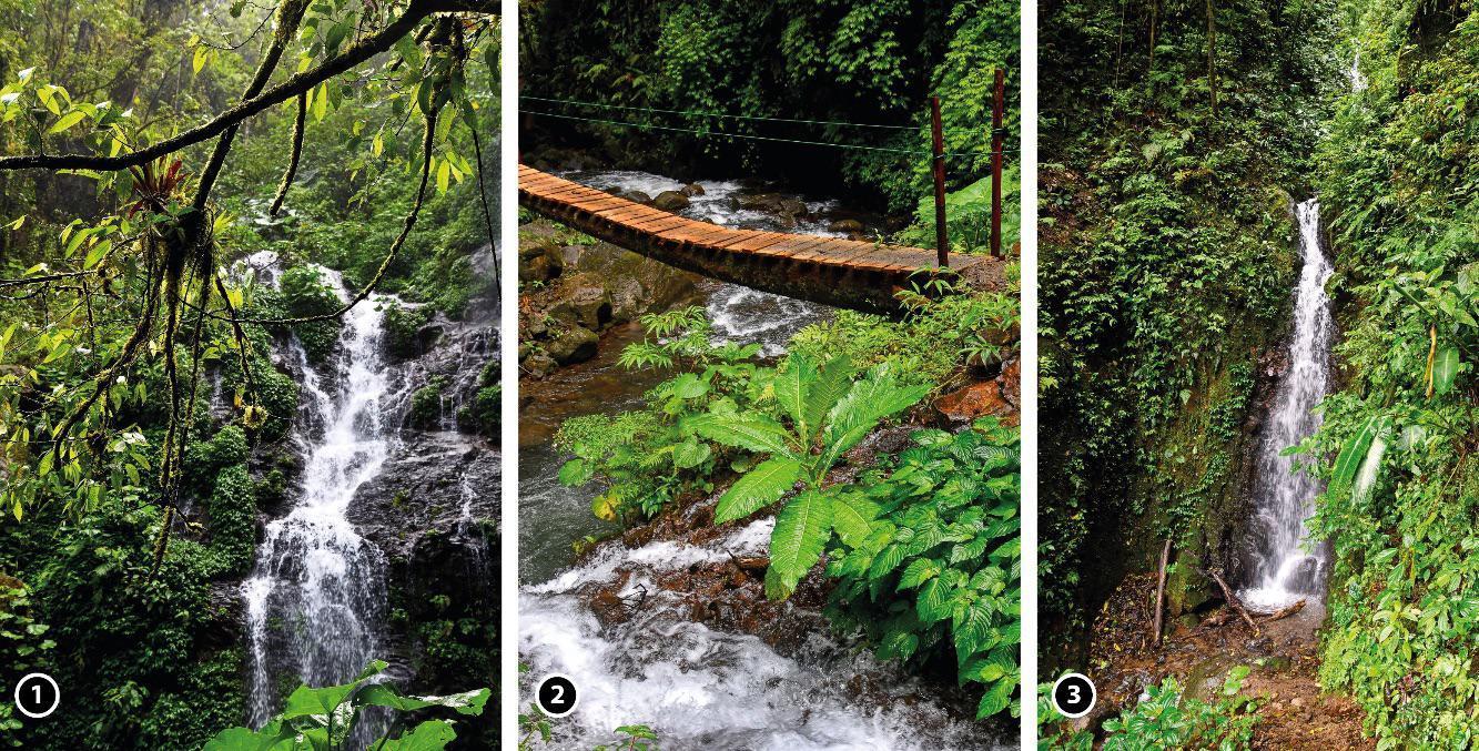 Page 52 of Pura Vida! Costa Rica! (II