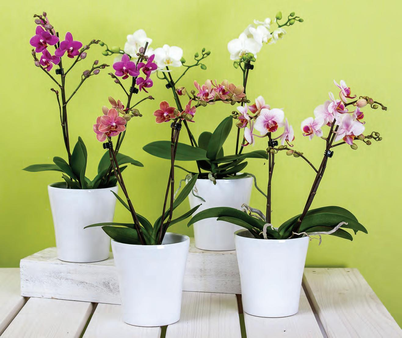 Page 20 of All About Orchids