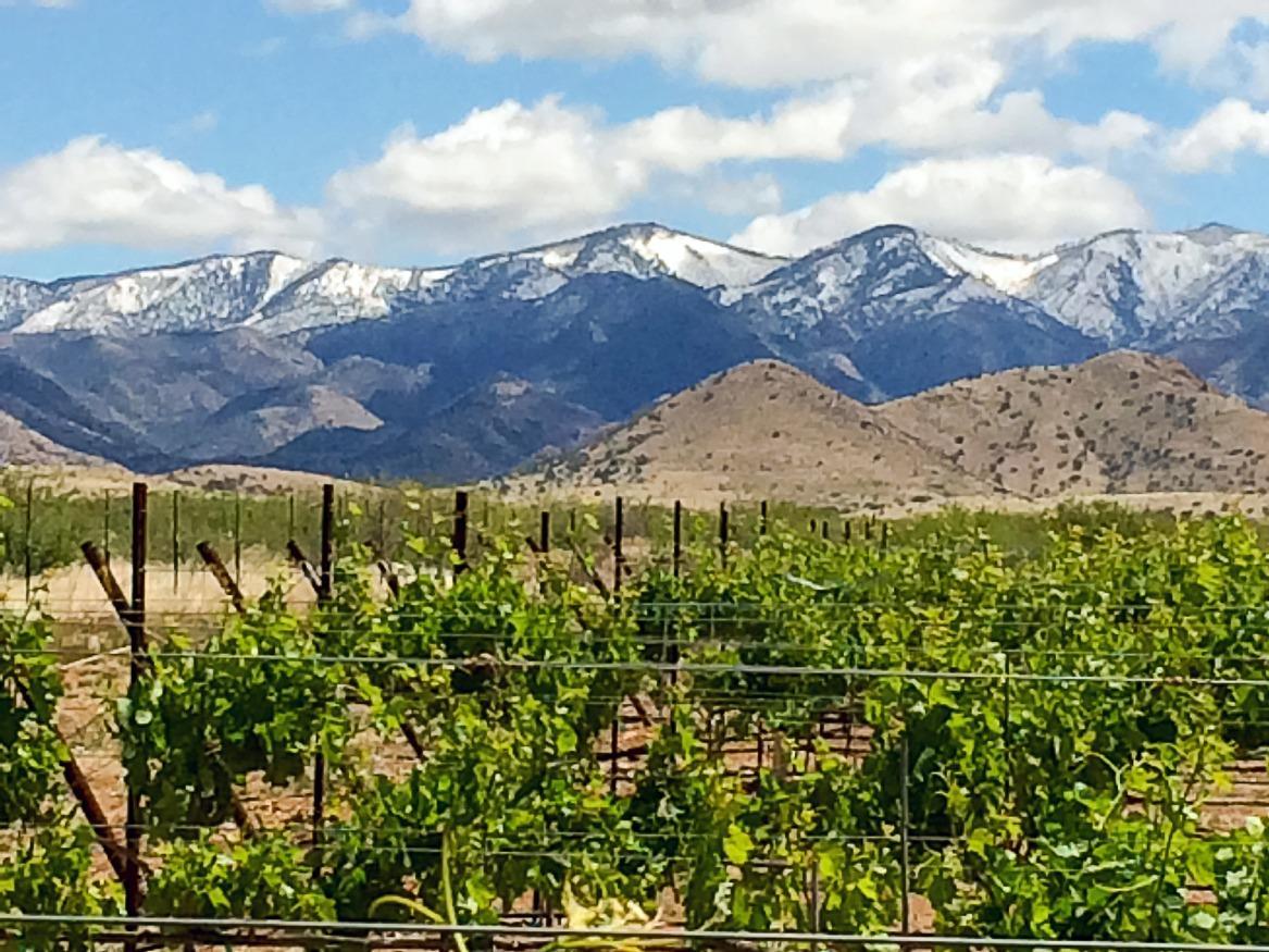 Page 10 of Discover Arizona Wine