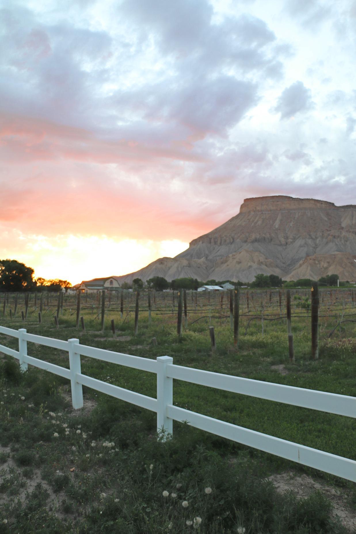 Page 16 of Sip & Savor Colorado's Wine Country