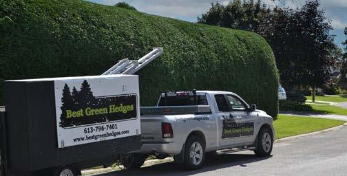 Page 35 of Profile: Best Green Hedges