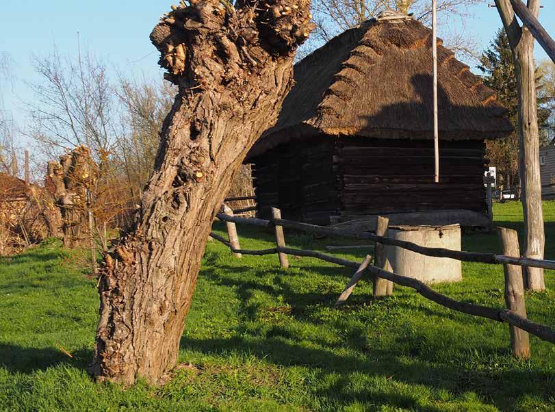 Page 22 of Wszyscy jesteśmy ze wsi tekst i foto Agata Witkowska