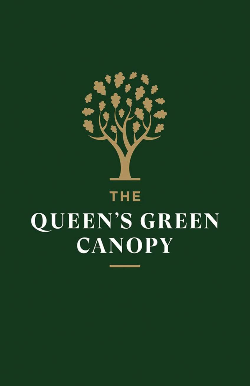 Page 38 of Queens Green Canopy