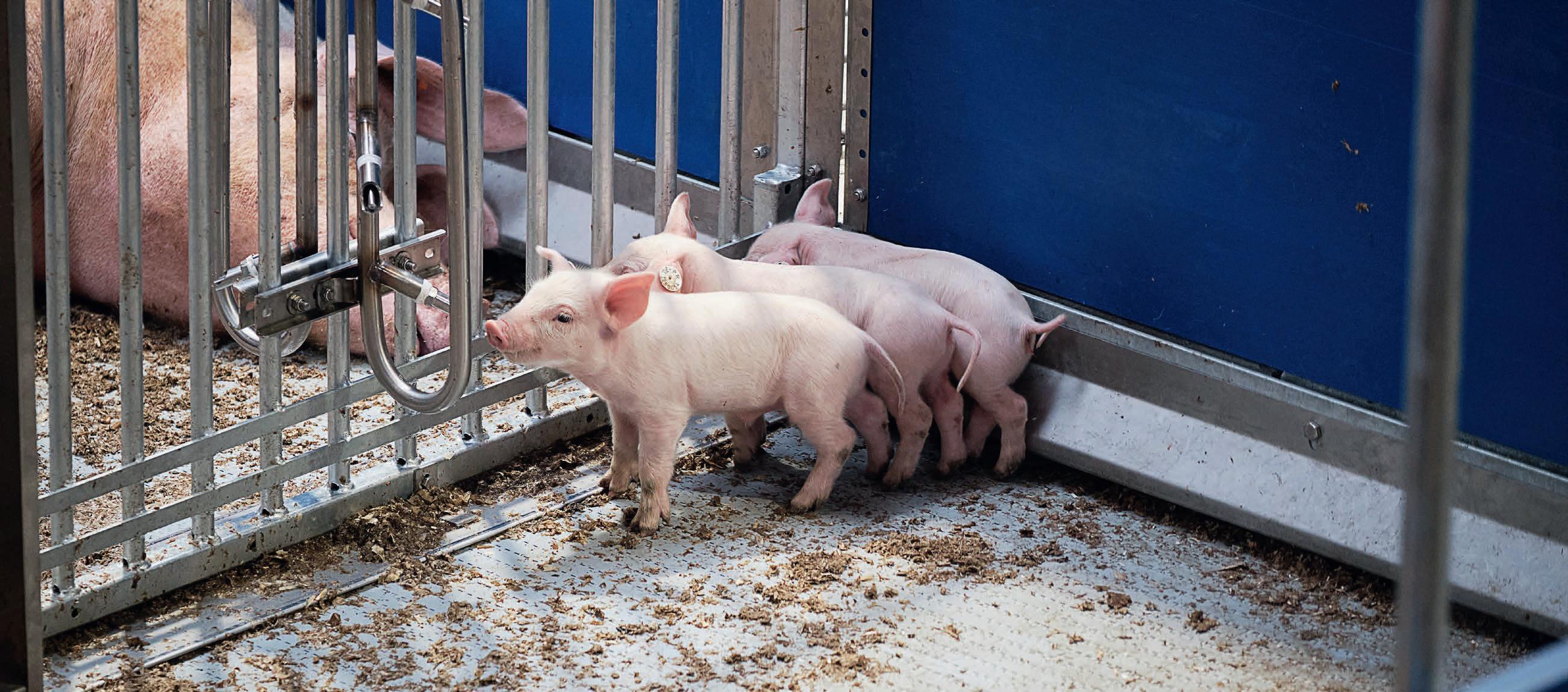 Page 24 of Vision Pig: Emissionsminderung