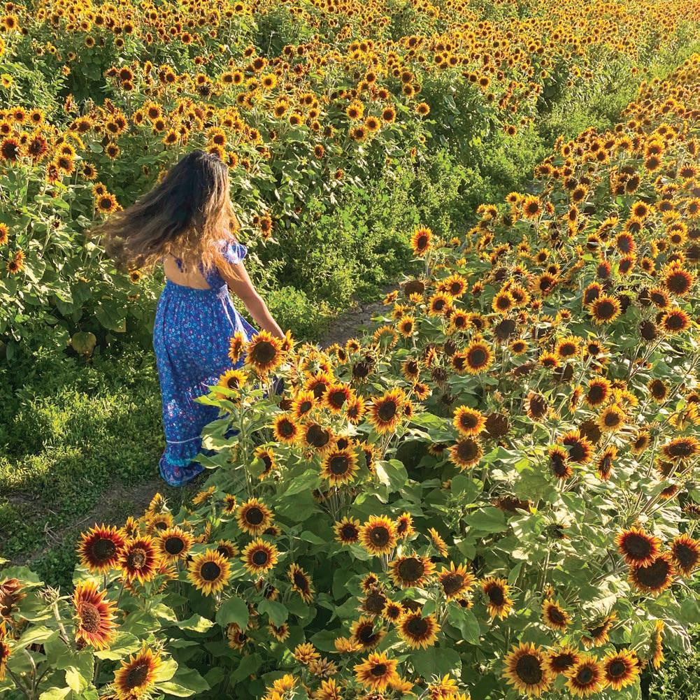 Page 23 of PEOPLE & PLACES A field of sun owers in Costa Mesa