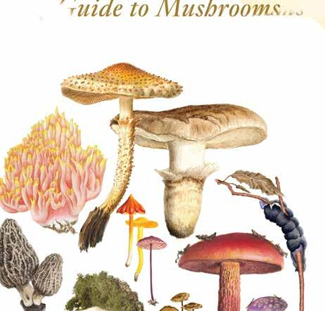 Page 50 of Nature, Science, Gardens, Mushrooms
