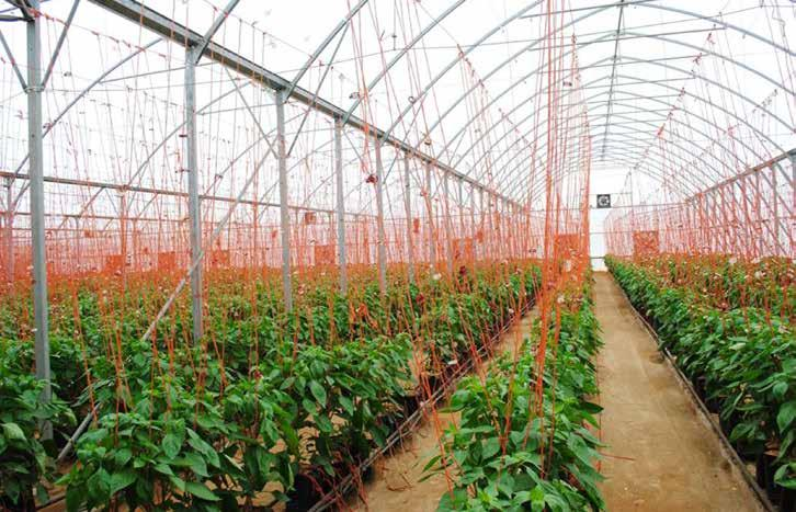 Page 14 of A Horticultural Cluster – Solution for Sectoral Growth and Food Security