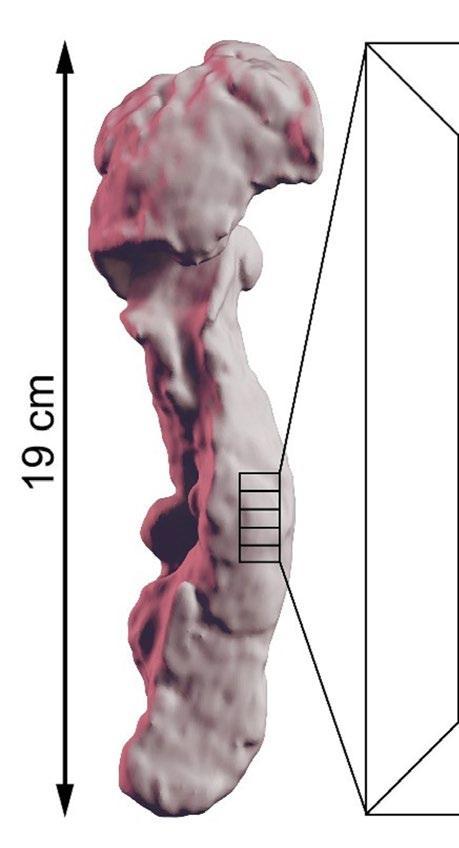 Page 42 of Ny metod möjliggör detalj-studier av mänskliga organ i 3D