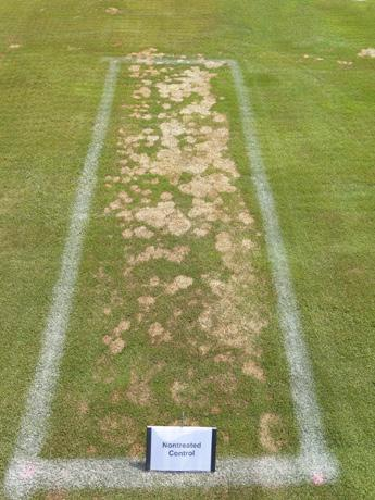 Page 26 of 2020-21 Snow Mold Control Study pages 22