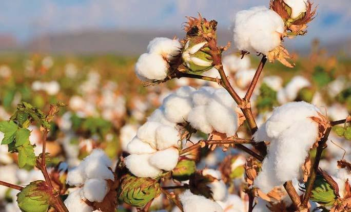 Page 46 of Does sustainable cotton production drive productivity and profitability for farmers? Asia Pacific Rayon Raises US$300m from National and International Affiliated Banks to Expand