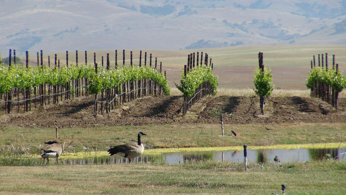 Page 56 of Discover San Benito County, CA