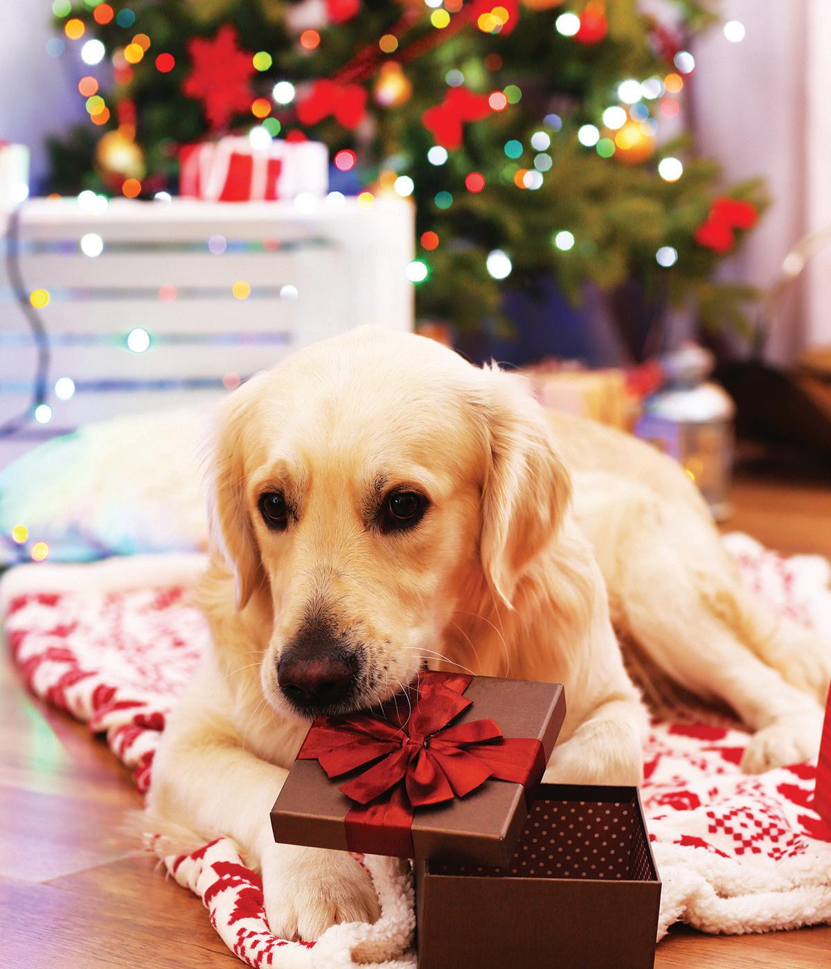 Page 52 of Are You Ready For A Puppy This Christmas?