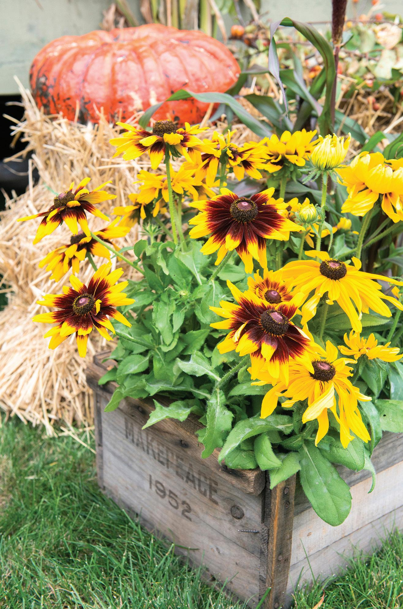 Page 14 of Autumn – A Wonderful Time To Garden
