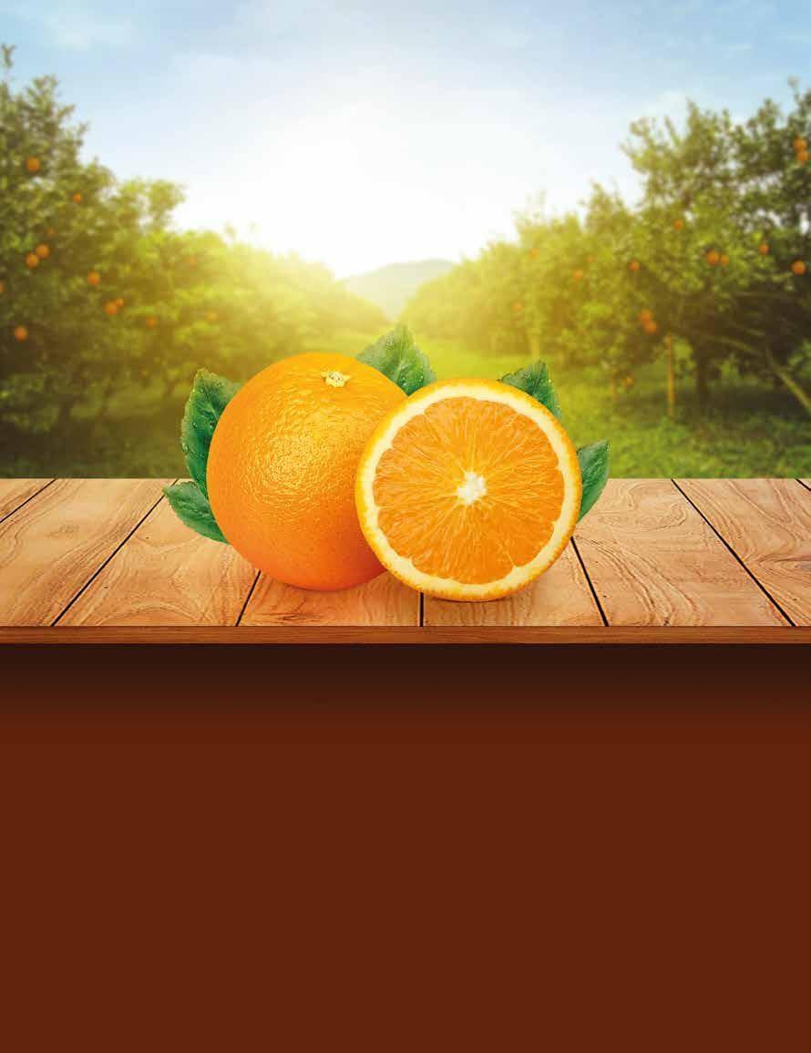 Page 64 of Fertilización integral en árboles de naranjo 'marrs' en producción con síntomas de virus de la tristeza de los cítricos y huanglongbing.